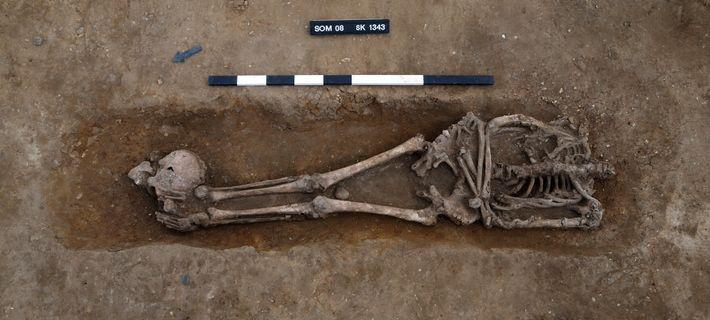 Knobb's farm, fouille du squelette le mieux conservé (Sk.1343)