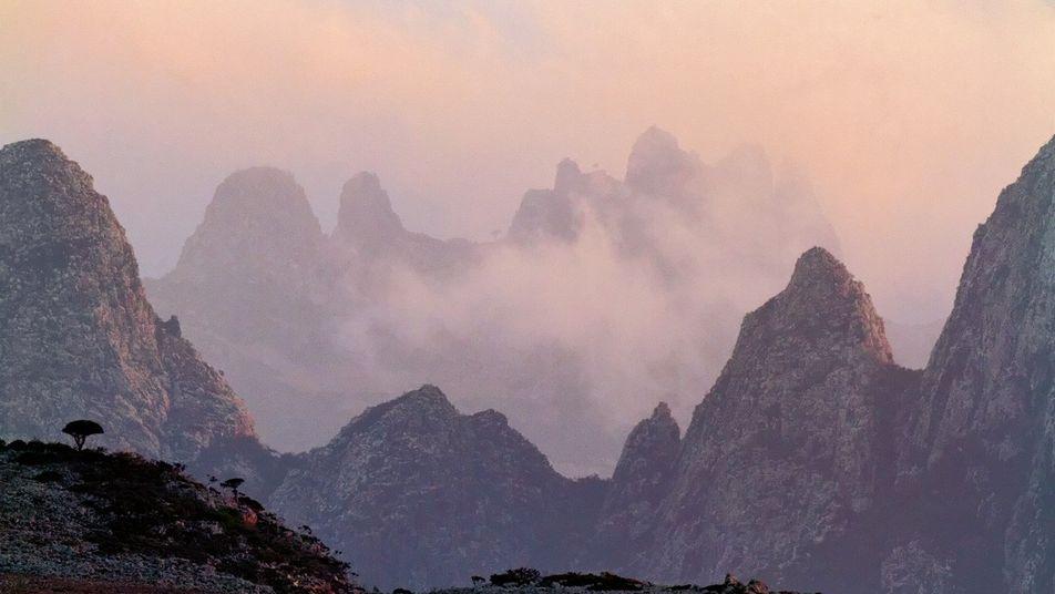 Excursion sur l'île de Socotra, à la découverte de sa faune et sa flore
