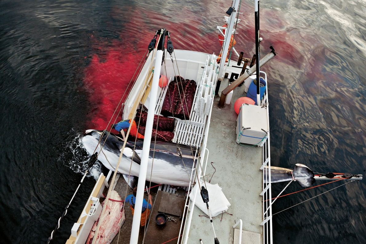 Une mer rouge sang