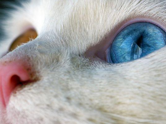 Conseils pour photographier les gens et les animaux
