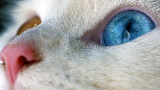 Un chat domestique en Ontario