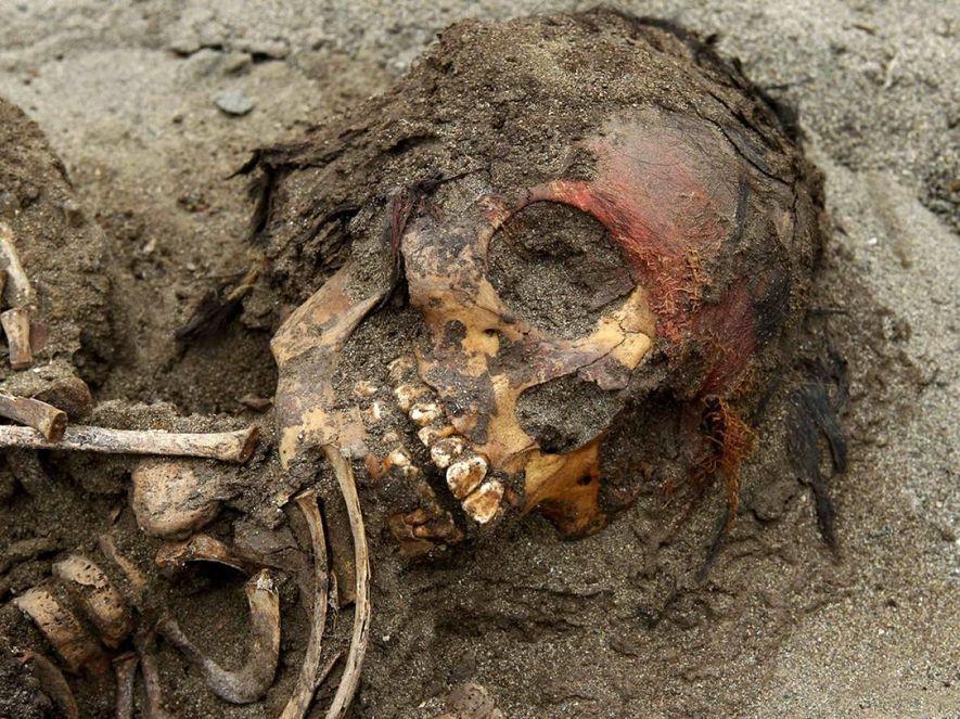 Les cheveux recouvrent encore le crâne d'un enfant chimú qui a peut-être été sacrifié dans le ...