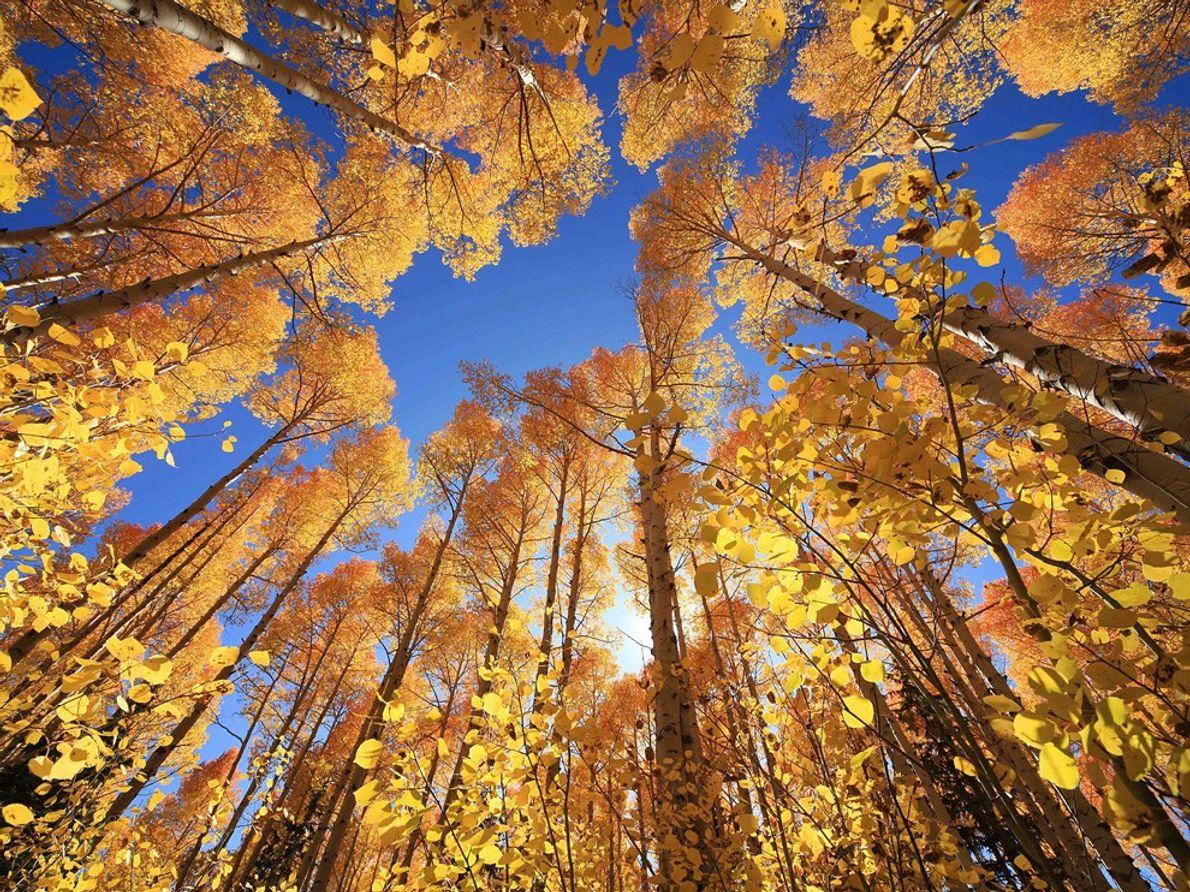 Arbres d'automne, Utah, États-Unis