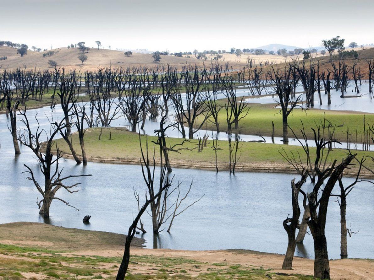 Certains experts prédisent que les troubles dans le bassin australien du fleuve Murray pourraient être un ...