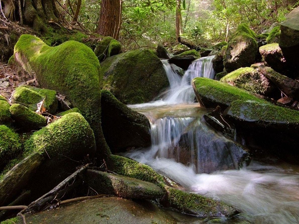 Ruisseau, Caroline du Nord