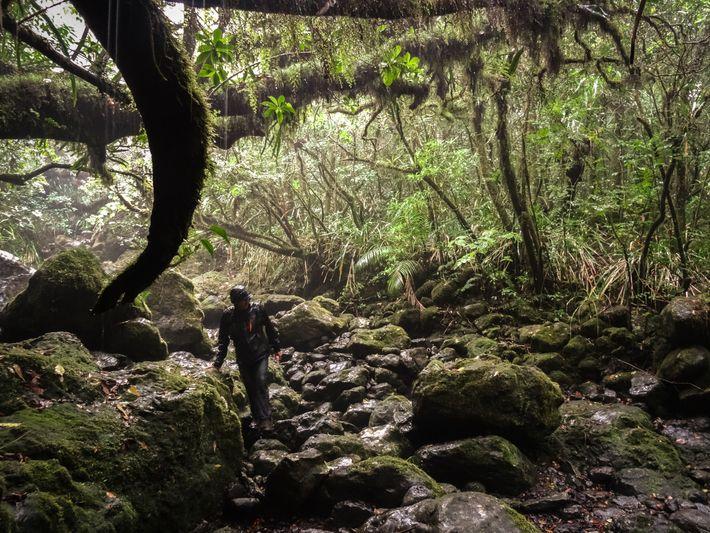 En explorant La Vallée Heureuse, en 2016, la bande de copains a fait une découverte inattendue ...