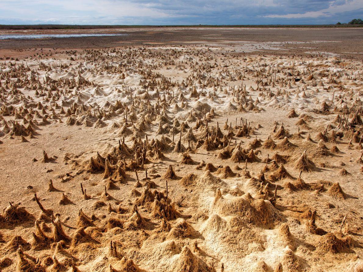 Les marais asséchés laissent apparaître des décors surréalistes. À perte de vue, des algues en forme ...