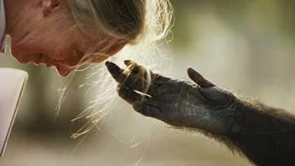 Ce photographe a bouleversé notre façon de voir les animaux
