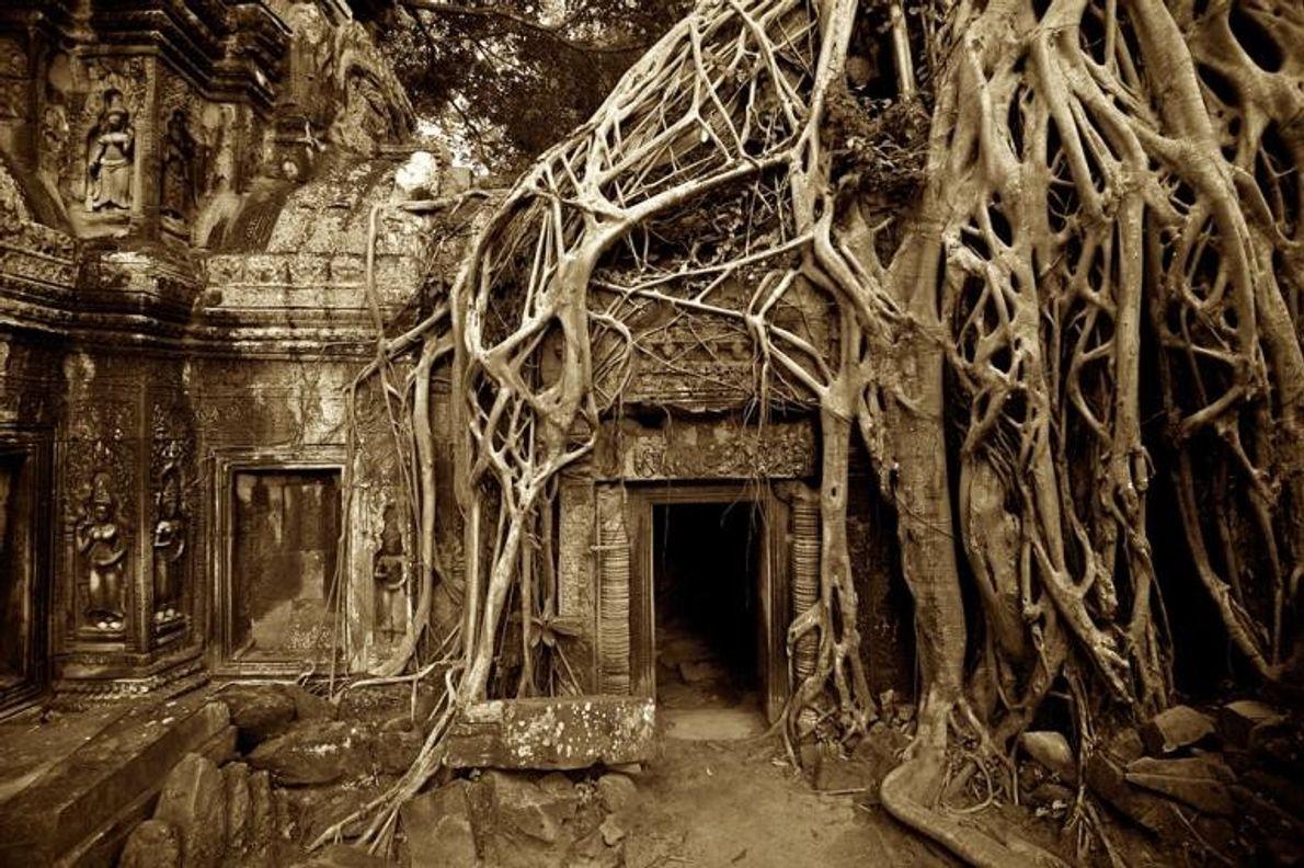 Le temple de Ta Prahm, Cambodge