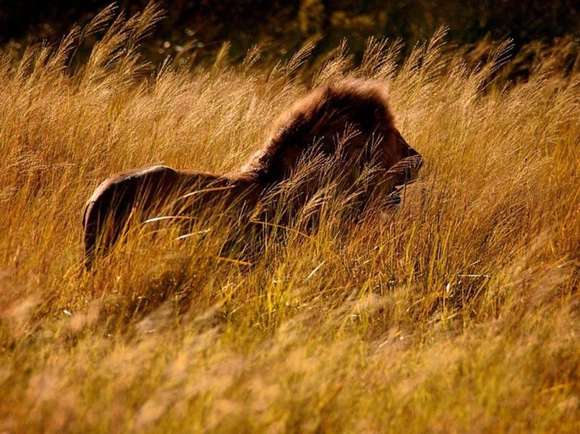 Le parc national de Serengeti, Tanzanie
