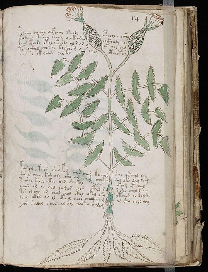 Une page du mystérieux manuscrit de Voynich.