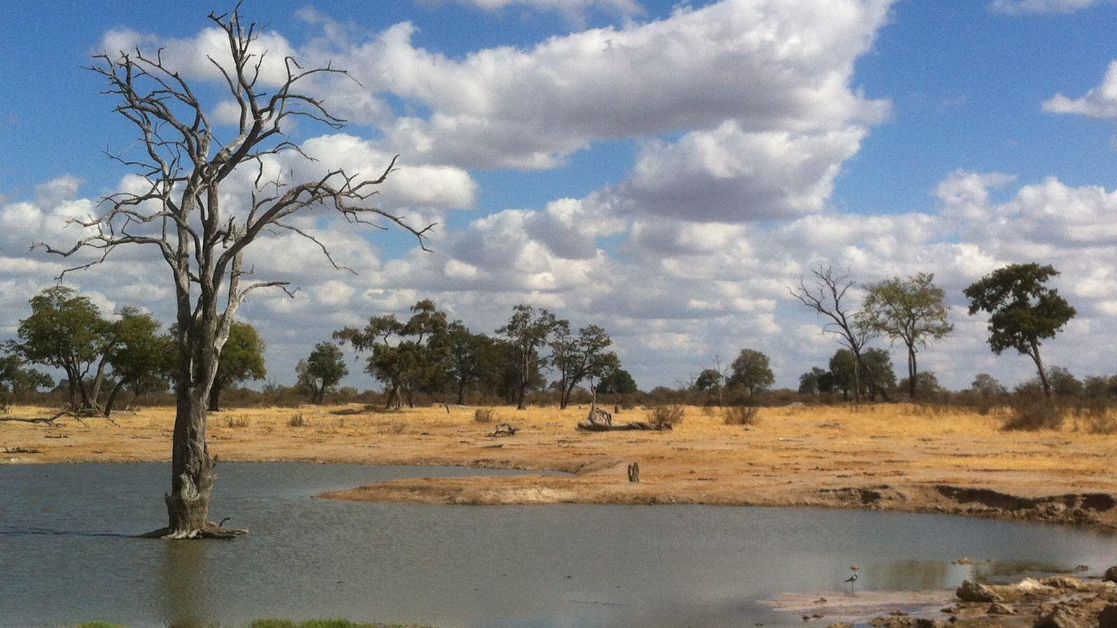 Point d'eau artificiel dans le parc national de Hwange au Zimbabwe, dans l'aire de conservation transfrontalière ...