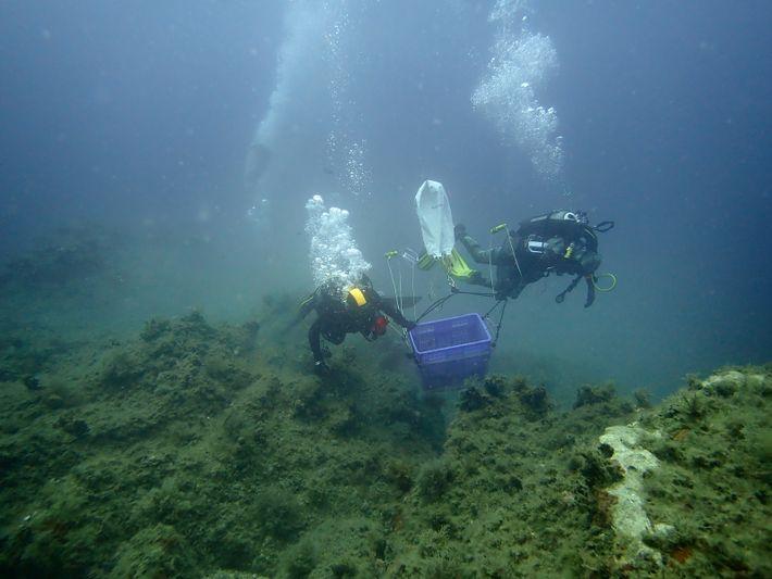 Line Le Gall et son équipe explore les fonds marins à la recherche de nouvelles espèces ...