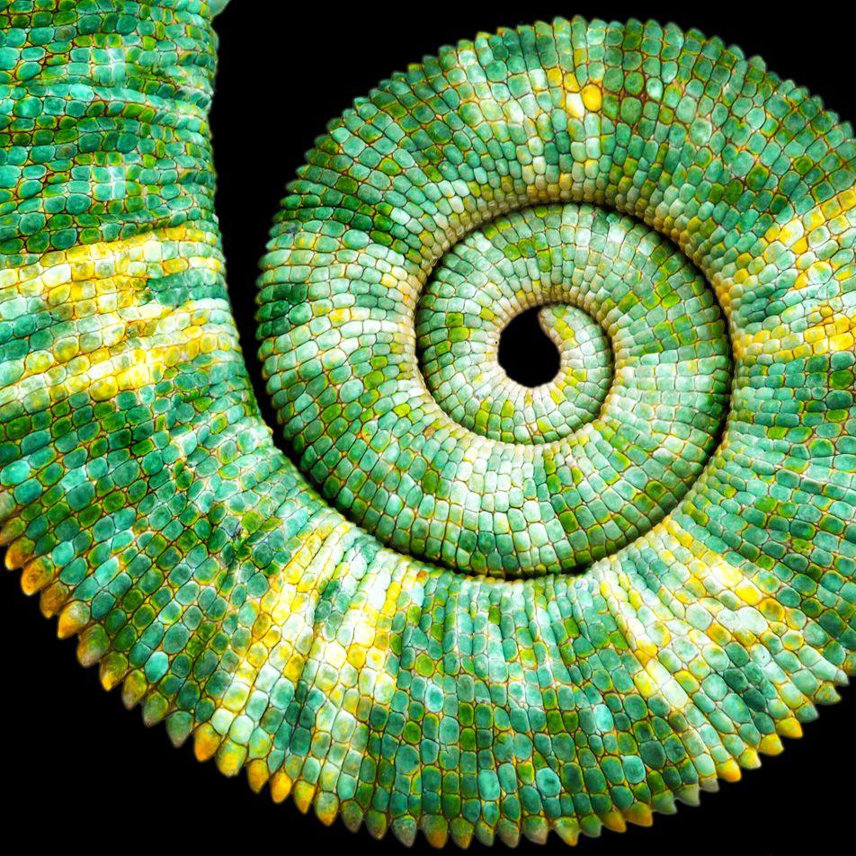 Mathématiques : la fascinante suite de Fibonacci et le nombre d'or