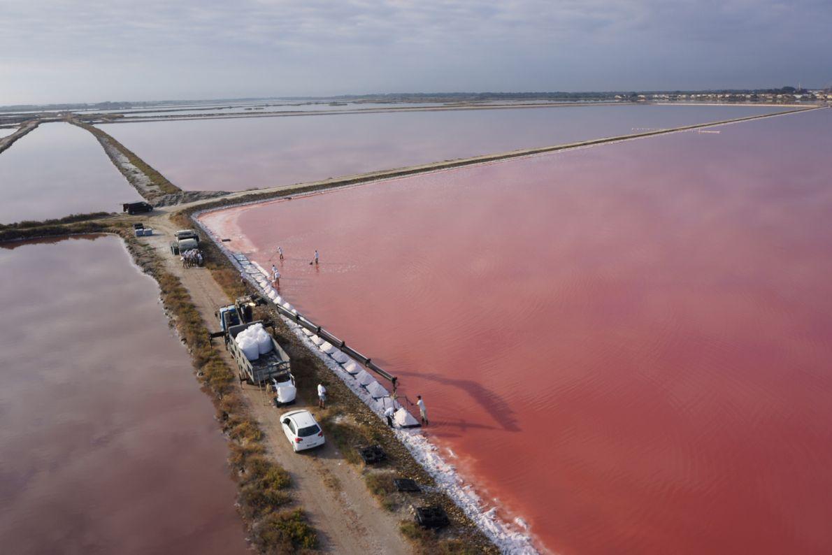 Chaque année, les salins d'Aigues-Mortes récoltent environ 300 000 tonnes de sel et 600 tonnes de ...