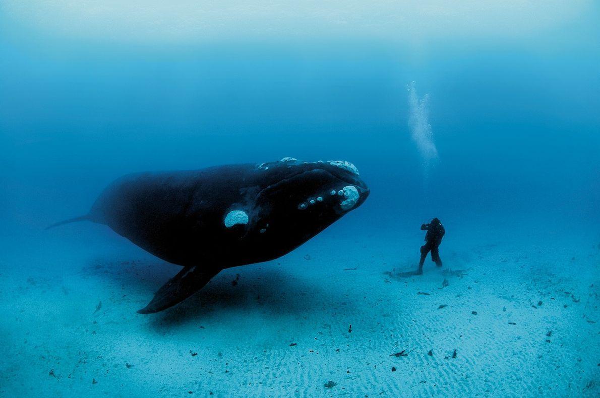 Rencontre sous-marine avec une baleine