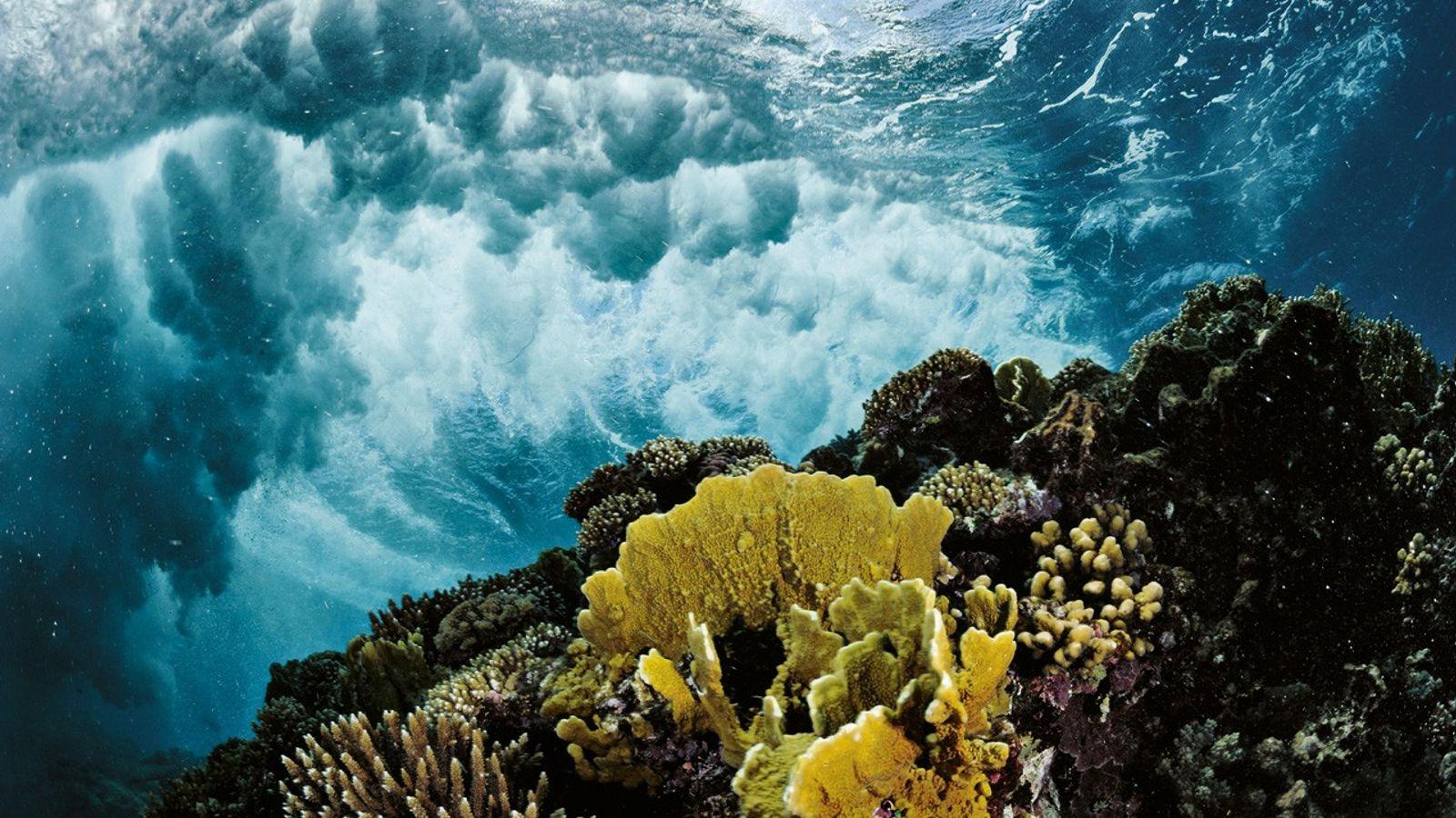 Des récifs presque vierges