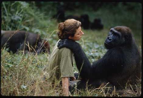 Dian Fossey : l'hommage de National Geographic