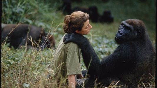 Dian Fossey : l'hommage de National Geographic