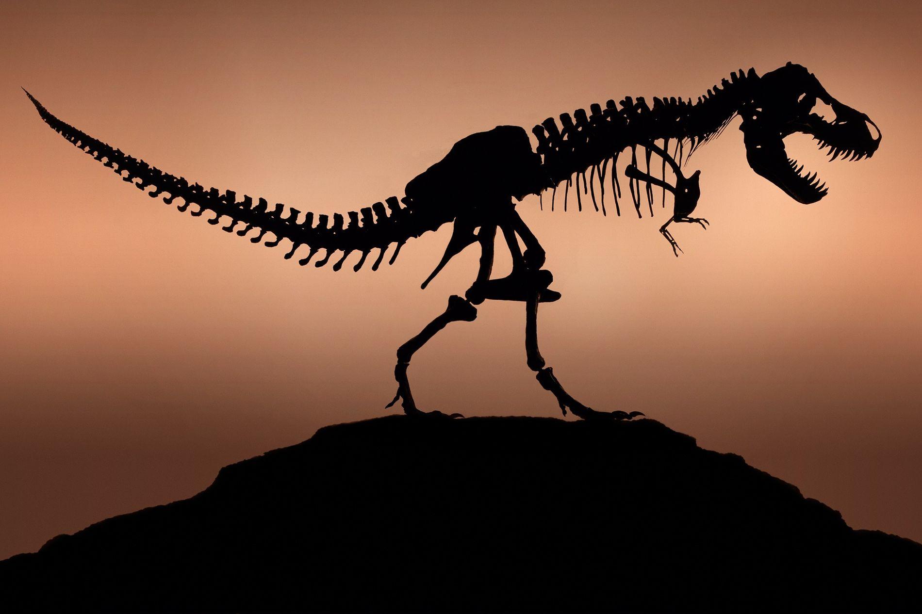 Selon les experts, Jurassic Park offre la meilleure représentation cinématographique du Tyrannosaurus Rex à ce jour. ...