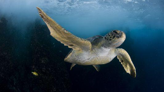 L'oxygène disparaît progressivement des océans
