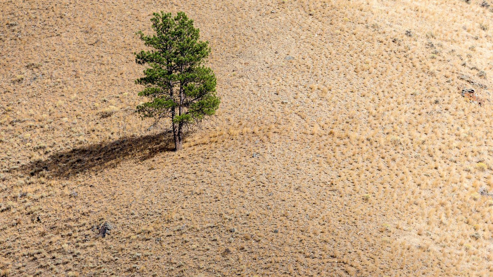 Arbre solitaire sur le flanc d'une colline, par une fin d'après-midi.