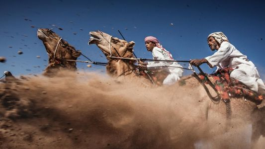 Oman : une impressionnante course de dromadaires vue du ciel