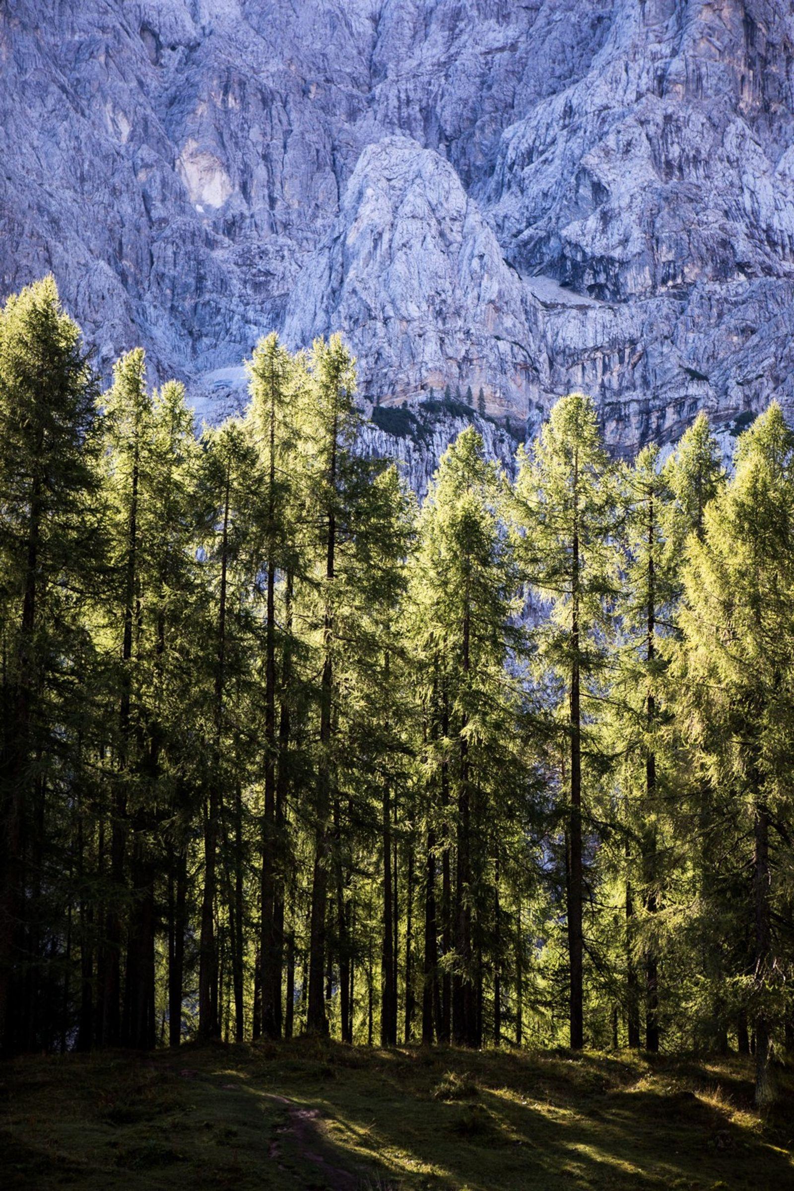 Sur la montagne Vrsic, les rayons du soleil percent une rangée d'arbres majestueux.