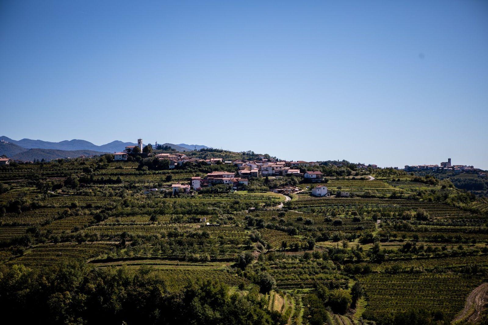 Les collines vallonnées qui entourent le vignoble d'Erzetič ainsi que le village de Višnjevik rappellent les ...