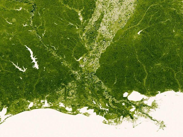 Les marais du Mississippi