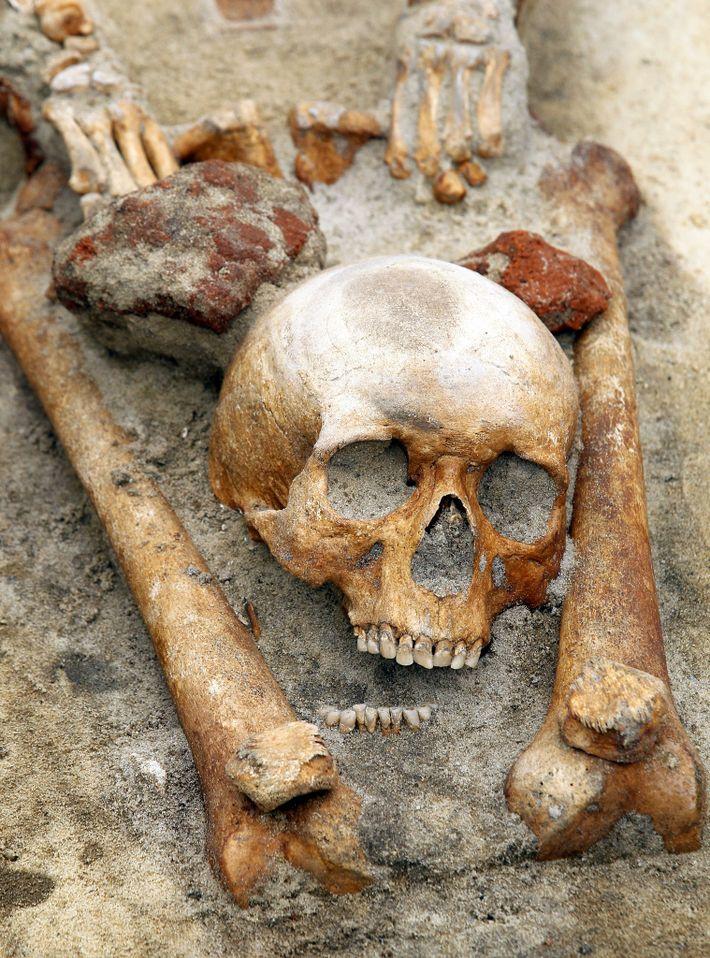 Des archéologues polonais soupçonnent que ce squelette dont la tête a été placée entre les jambes ...