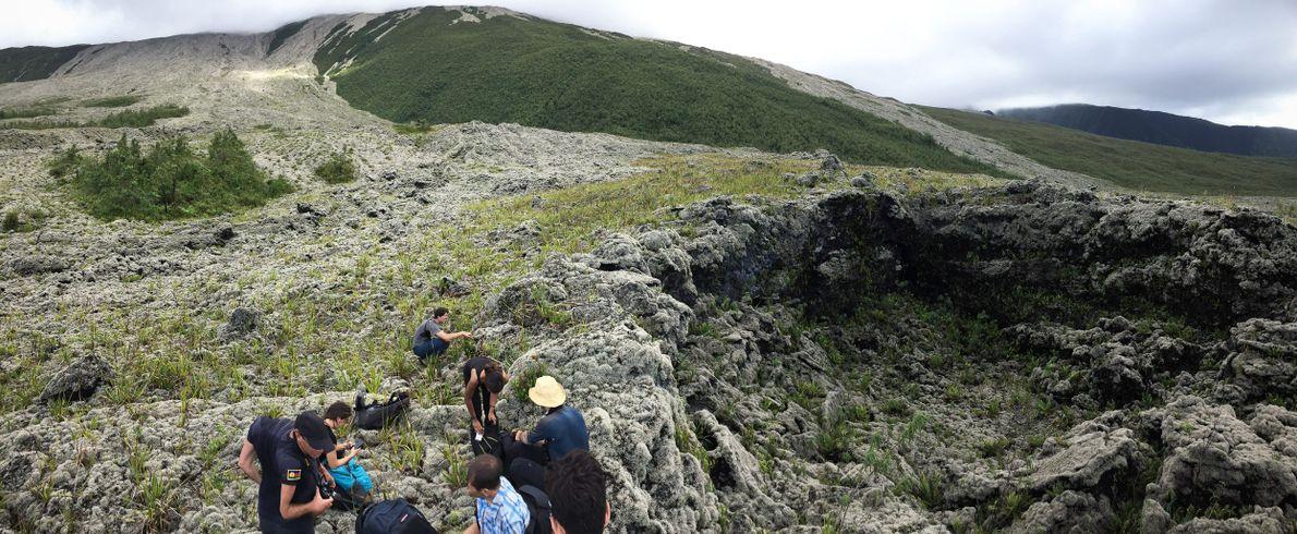 La végétation recolonise doucement les anciennes coulées de lave du Piton de la Fournaise, l'un des ...