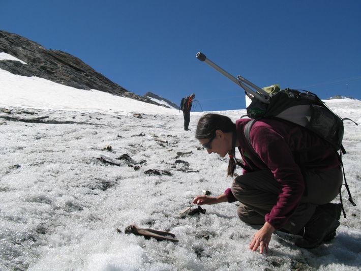 Prélèvement d'ossements de mulets sur le glacier du Théodule à Zermatt (VS).