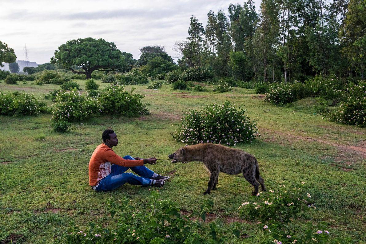 Abbas Yusuf s'assoit aux côtés d'une hyène, à proximité de sa tanière. Abbas, surnommé « l'ami ...
