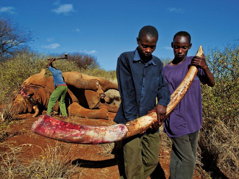 Les braconniers n'ont pas de frontières, pourquoi les protecteurs des animaux en auraient-ils ?