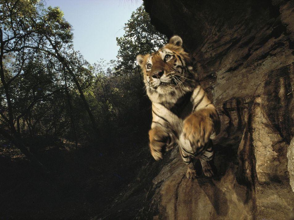 Ce photographe a bouleversé notre façon de voir des animaux