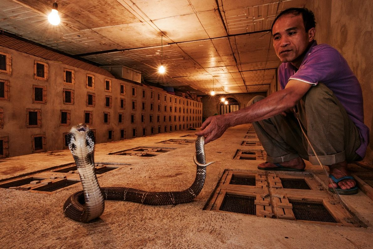 Élevage de serpents en bunker