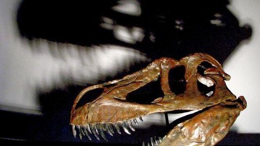 Le plus grand prédateur du Jurassique découvert en Europe était une « grosse brute »