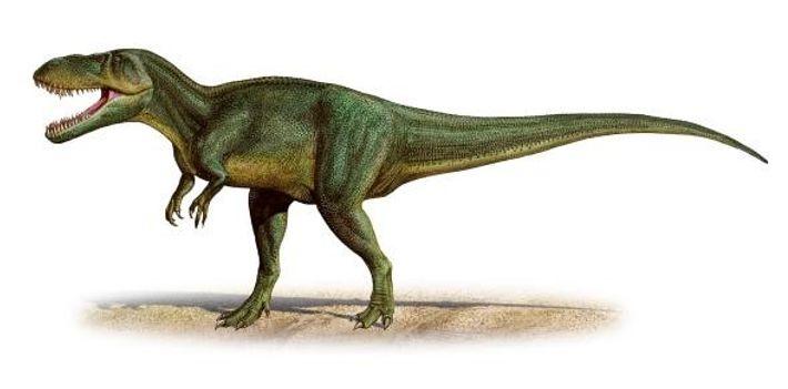 Les scientifiques pensaient au départ que les fossiles de T. gurneyi appartenaient à une espèce proche, ...