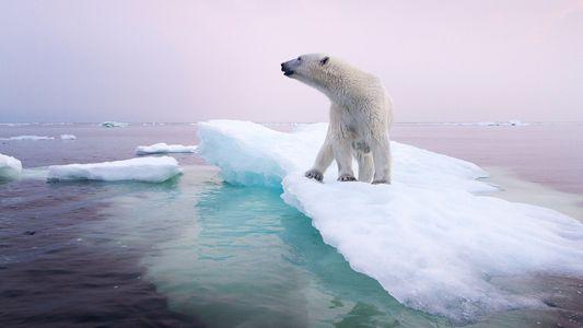 7 espèces en proie aux changements climatiques - dont une déjà disparue