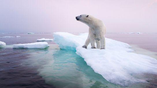 ours-polaire-artice-changement-climatique-1200