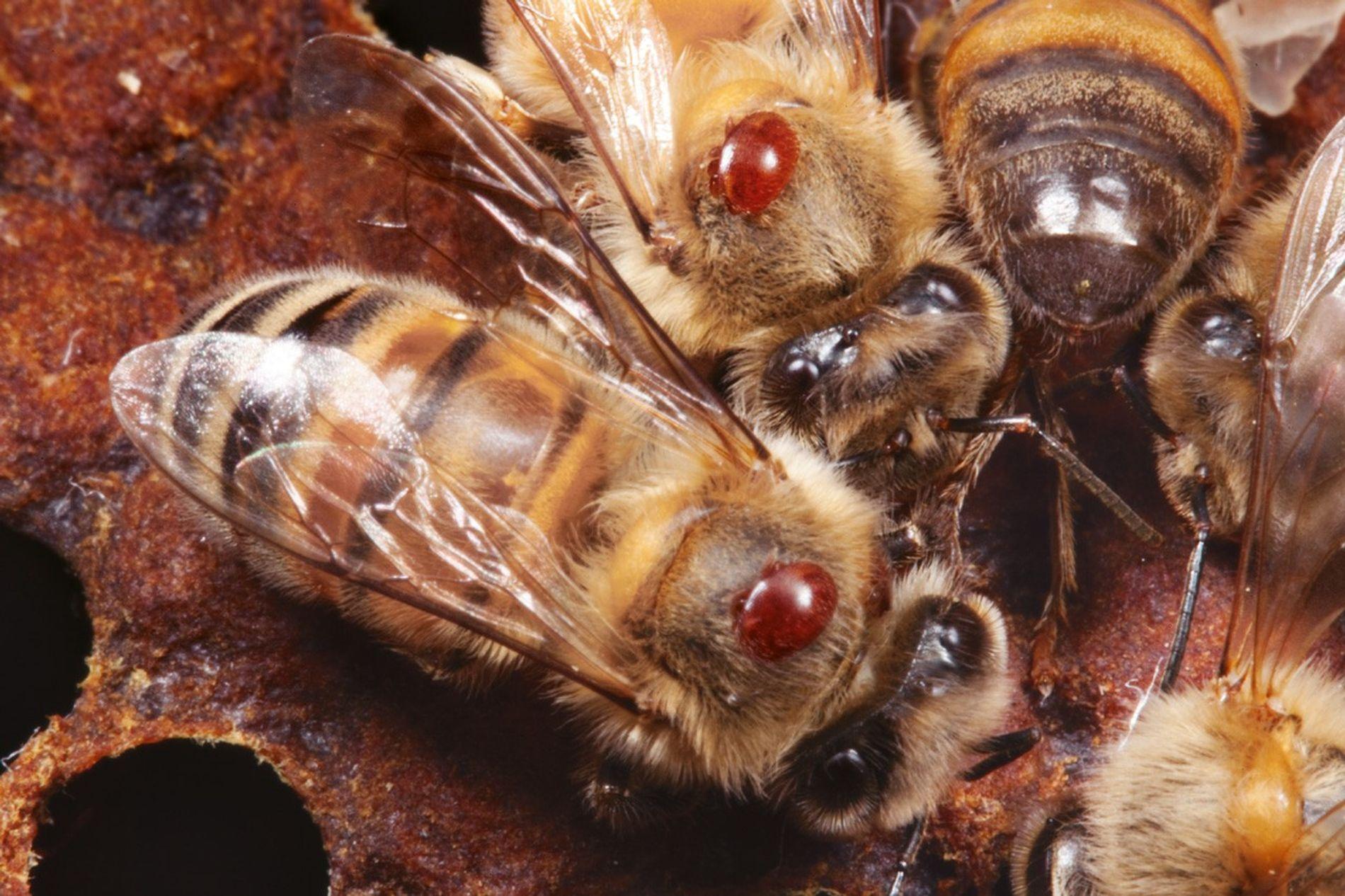 Communiquer en dansant ou le management par les abeilles