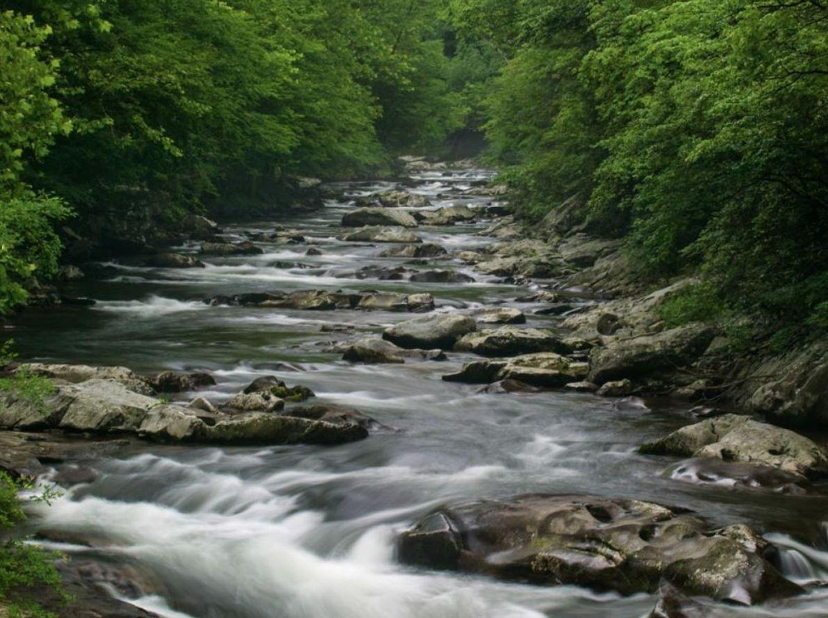La partie médiane de la Little Pigeon River glisse à travers les rochers du parc, qui ...