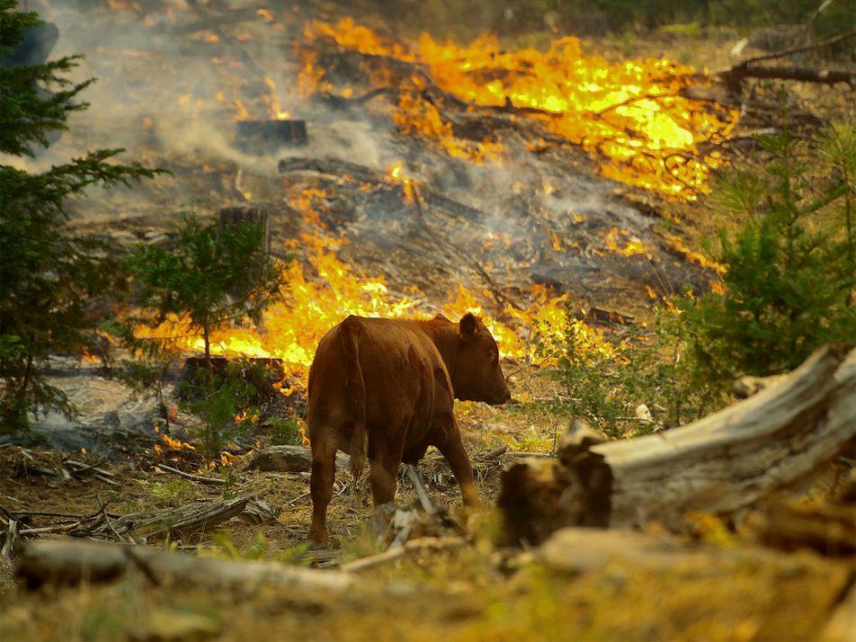Californie, Australie : la faune sauvage assiégée par les feux de forêt