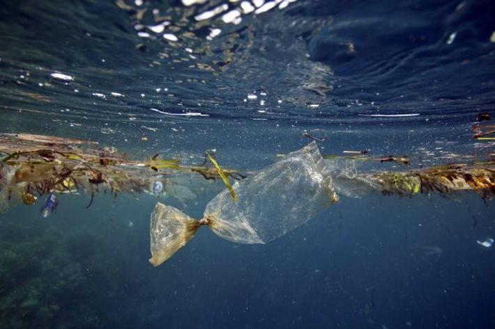 Un sac plastique flotte dans l'eau près de la côte de Pulau Bunaken, en Indonésie.