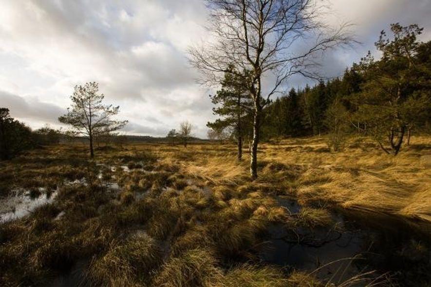 Une petite partie de la tourbe où l'homme de Tollund a été découvert subsiste aujourd'hui, sur ...