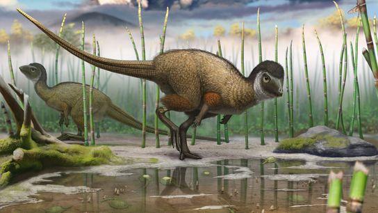 Cette illustration du Kulindadromeus zabaikalicus, une nouvelle espèce de dinosaure à plumes, le replace dans son ...