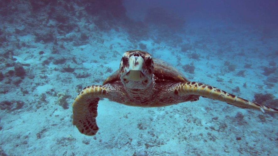 Environnement 101 : les océans