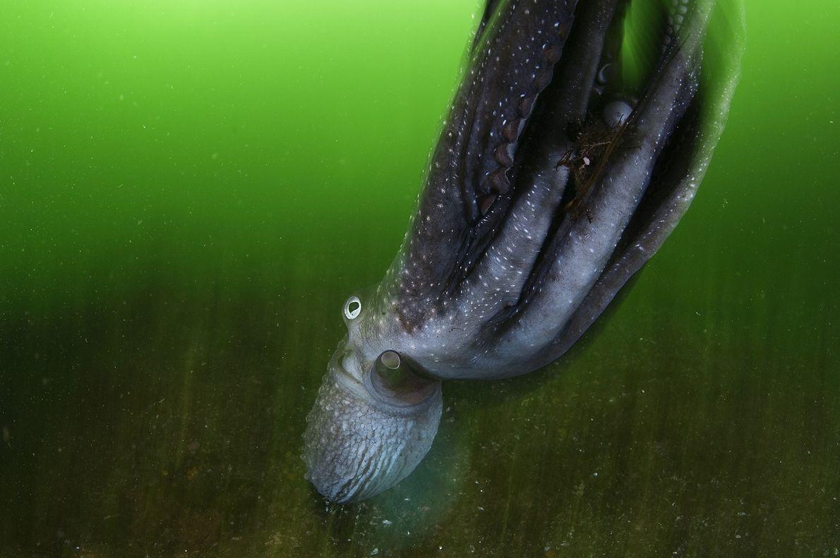 Verts d'eau