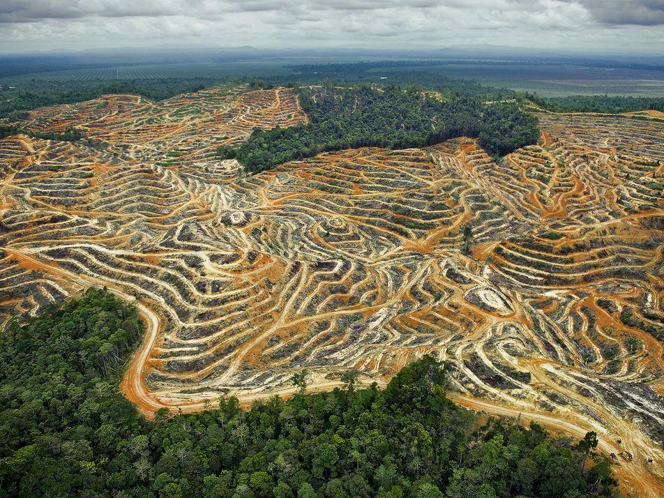 Ce qu'il faut savoir sur l'huile de palme